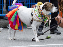 Vancôver 2016 Pride Parade em Vancôver, Canadá fotos de stock royalty free