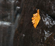 Vanchin river. Autumn. Yellow leaf. Stock Photography