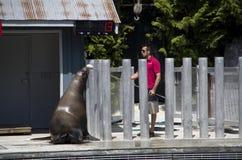 Vancouver Aquarium Sea Lion show stock image