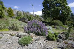 Vancouver botanisk trädgård på universitetet av British Columbia Arkivfoto
