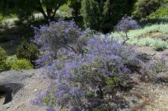 Vancouver botanisk trädgård på universitetet av British Columbia Royaltyfri Fotografi