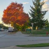VANCOUVER, CANADA - 1ER OCTOBRE 2017 : L'avenue d'Euclid a coloré des arbres un jour d'automne Image libre de droits