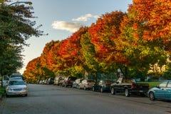 VANCOUVER, CANADA - OKTOBER 1, 2017: Euclidweg Gekleurde bomen op een de herfstdag Royalty-vrije Stock Foto's