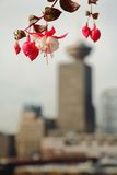 Vancouver Cityscape Flowers Royalty Free Stock Photo