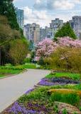 Vancouver Czereśniowi okwitnięcia od Stanley parka Fotografia Stock