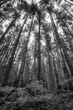 Vancouver forest Royalty Free Stock Photos