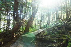 Vancouver forest. Rain forest in Vancouver island, British Columbia, Canada royalty free stock image