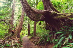 Vancouver forest Royalty Free Stock Images