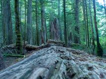 Vancouver island forest stock images