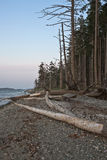 Vancouver Island Shore line Royalty Free Stock Image