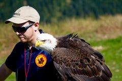 VANCOUVER KANADA - JUNI 12, 2010: En förlagehanterare med en utbildade skalliga Eagle på skogshönsberget Royaltyfria Foton