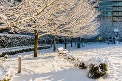 VANCOUVER KANADA, Luty, - 24, 2018: Zima ranek po nocy śnieżny miecielicy wierzby park Zdjęcia Royalty Free