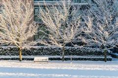 VANCOUVER KANADA, Luty, - 24, 2018: Zima ranek po nocy śnieżny miecielicy wierzby park Obrazy Royalty Free