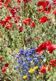 Vancouver miasta kwiaty Fotografia Stock