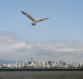 Vancouver panorama with English Bay and seagull Stock Photos