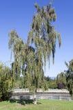 Vancouver parkerar trädet royaltyfri bild