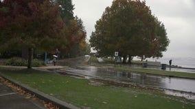 Stanley Park Rain, Vancouver 4K UHD
