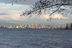 Vancouver skyline underneath hanging tree. Wide Skyline shot with overhanging tree - Vancouver, British Columbia royalty free stock photography
