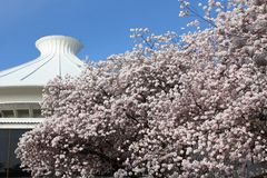 Vancouver Space Center and Blossoms Stock Image