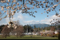 Vancouver Spring Royalty Free Stock Photography