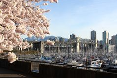 Vancouver Spring, British Columbia, Canada Royalty Free Stock Photos