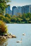Vancouver stadshorisont Royaltyfri Bild