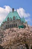 Vancouver vår Cherry Blossoms Kanada royaltyfria foton