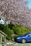 Vancouver wiosny Czereśniowi okwitnięcia Kanada Fotografia Stock