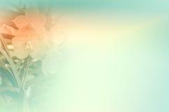 Орхидея Vanda Стоковые Фотографии RF