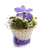 Vanda and chrysantemums flowers isolated Stock Photos