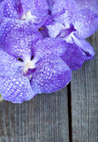 Vanda coerulea orchids on the wooden background, close up Stock Photos