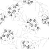 Vanda Miss Joaquim Orchid. Singapore National Flower. on White Background. Vector Illustration. Vanda Miss Joaquim Orchid. Singapore National Flower. on White vector illustration