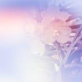 Vanda Orchid Royalty-vrije Stock Foto