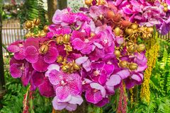 Vanda Orchid and Painted Jacaranda seeds Royalty Free Stock Images