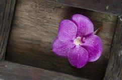 Vanda Orchids of Thailand. Stock Photos