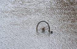 Fahrradrad steht über der Wasseroberfläche des Kanals hervor lizenzfreie stockfotografie