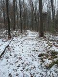 Vandring i skogen Royaltyfri Bild