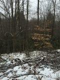 Vandring i skogen Royaltyfri Fotografi