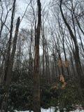 Vandring i skogen Arkivbild