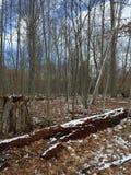 Vandring i skogen Arkivbilder