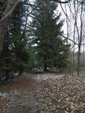 Vandring i skogen Royaltyfria Foton