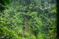 Vandringen i djungeln av Bali Indonesien gräsplan spricker mycket ut Royaltyfri Foto