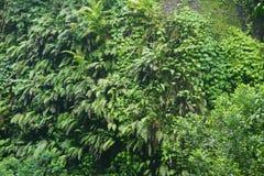 Vandringen i djungeln av Bali Indonesien gräsplan spricker mycket ut Royaltyfri Bild