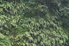 Vandringen i djungeln av Bali Indonesien gräsplan spricker mycket ut Arkivbild