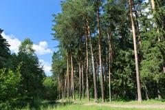 Vandringsled, grönt gräs och högväxta träd i skog Arkivbilder