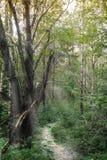 Vandringsled i aftonskogen fotografering för bildbyråer