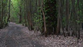 Vandringsled i djupa busksn?r f?r en skoggr?splan arkivfilmer