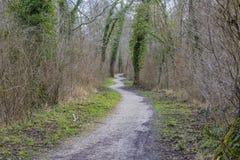 Vandringsled i en skog arkivfoton