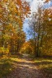 Vandringsled i en skog i höst arkivbilder