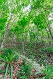 Vandringsled i en tät grön skog Royaltyfria Foton